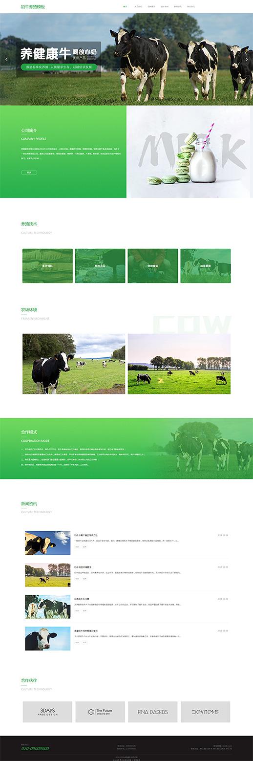 优质奶牛养殖