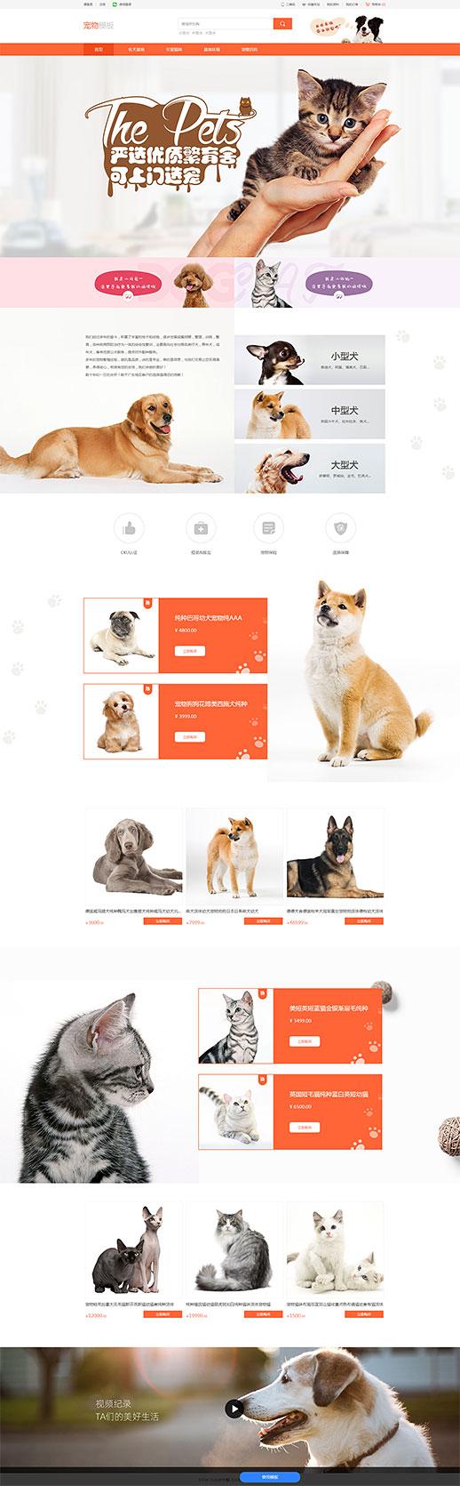 宠物企业模板_宠物企业网站模板